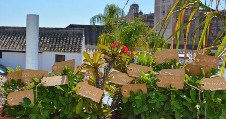 Coctel to go Pura Vida Terraza Sevilla